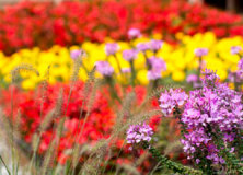 Un giardino speciale