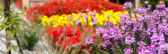 Il giardino sensoriale